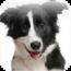 參考售價(美金):$1.99元 您是一個很愛狗的人嗎?那麼您一定會很喜歡這款專為愛狗人士所設 […]
