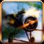 參考售價(美金):4.99元 這款空戰遊戲可讓玩家們體會到超逼真的3D立體空中戰鬥遊戲,駕駛 […]