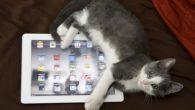 自從網路上出現了貓咪玩 iPad 的影片後,軟體開發者就為貓咪開發了許多種不同的遊戲,其中一 […]