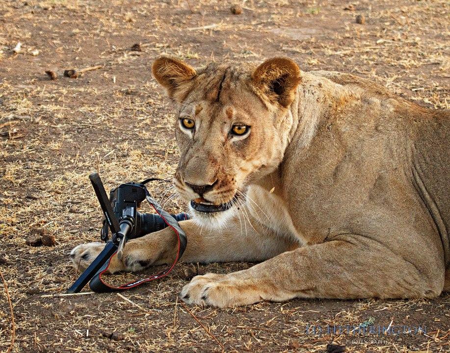 20130105 A Lion Steals My Camera-19