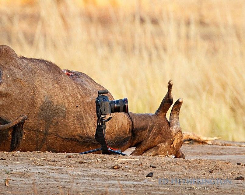 20130105 A Lion Steals My Camera-25