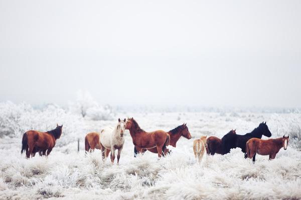 2130122 Kevin_Russ_horses