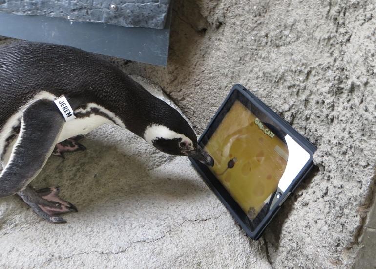 Jeremy_plays_iPad-770x550