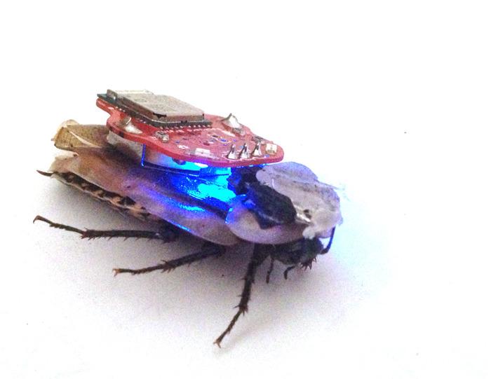 The RoboRoach-7