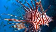 喜愛色彩豐富豔麗、體態百變的熱帶魚嗎??在這款軟體中有多種熱帶魚的照片,高畫質影像讓你可以很 […]