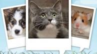 這款軟體讓使用者可以在寵物的照片上做點手腳,製作出寵物開口說話的效果。只需要依軟體要求標記眼 […]