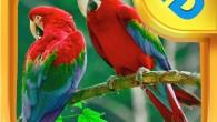 每天早晨聽著小鳥歡快的歌聲開始美好的一天是很幸福的,這款多姿多彩的電子互動故事書是專門為喜愛 […]