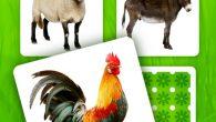 這是一款配有農場動物聲音的教育記憶遊戲。遊戲會逐漸顯示所有的動物圖片,玩家必須找到兩個匹配成 […]